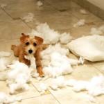 Puppy mess- Flickr
