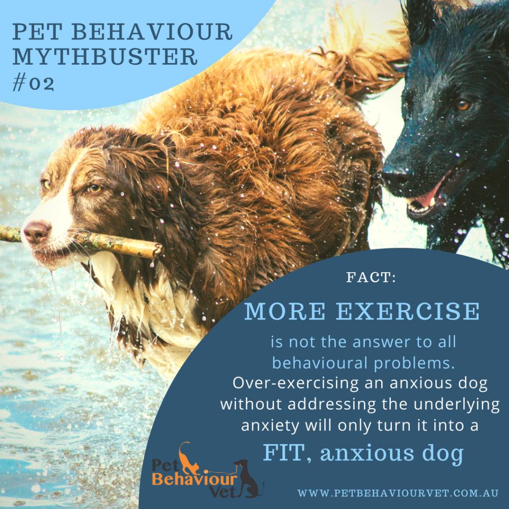 Pet Behaviour Mythbuster #2 - More exercise is not always the answer