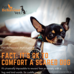 Pet Behaviour Mythbusting #1 Comforting scared dogs